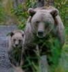 オーロラ上映&トークライブ「くまが命をつなぐアラスカでオーロラをみてみよう」